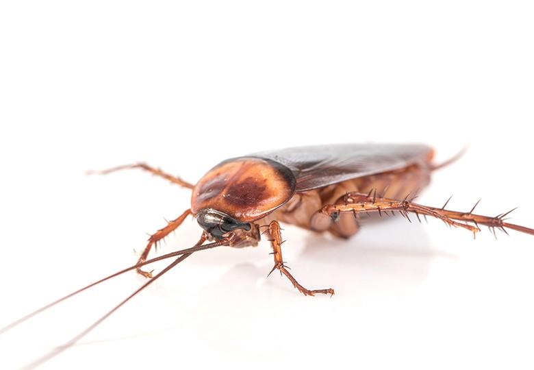Common Ants Control 1 ateam 80x80
