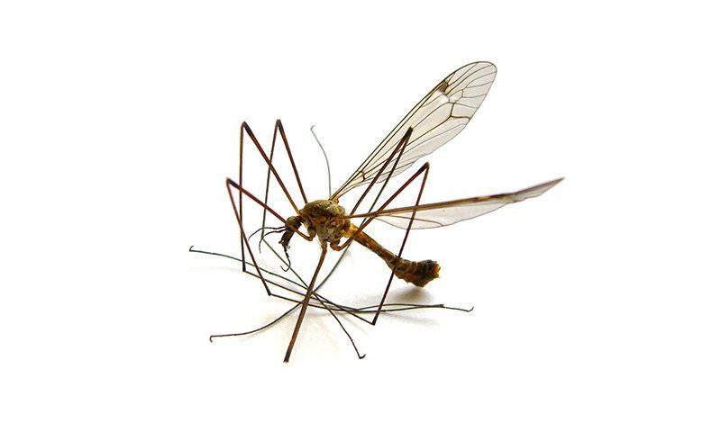 Mosquitoes Control 4 ateam 780x480