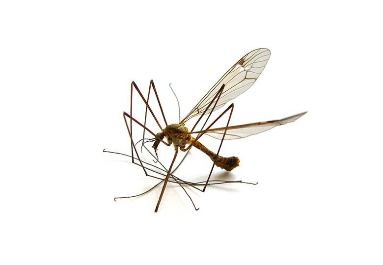 Common Ants Control 4 ateam 80x80