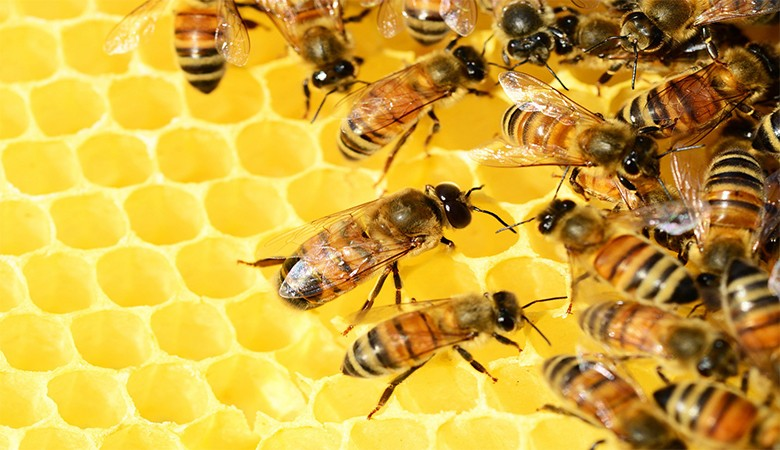 saw a bee hive? don't panic! Bees in HDB? What do you do? Bees